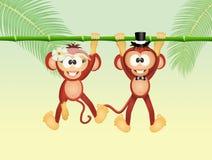 Monkeys in love Royalty Free Stock Photo
