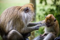 Monkeys. Macro photography showing a close up view of beauty flora and fauna Stock Photography