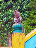 Monkeys at the Malaysian Batu Caves Royalty Free Stock Image
