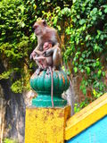 Monkeys at the Malaysian Batu Caves Stock Images