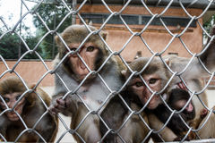Monkeys in a monkey house in Sukhumi, Abkhazia Stock Images