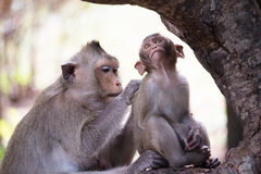 Monkeys mother and child Royalty Free Stock Images