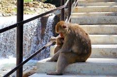 Monkeys. Mother monkey hugging it's child Royalty Free Stock Image