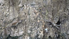 Monkeys moving on the stone island above clear turquoise sea water. Thailand stock video footage
