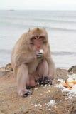 Monkeys in nature. Stock Photo