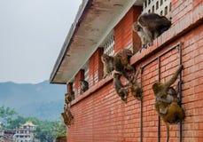 Monkeys near Swayambhunath stupa in Kathmandu Royalty Free Stock Photo