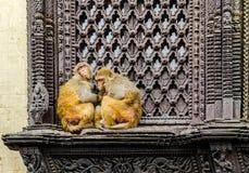Monkeys near Swayambhunath stupa in Kathmandu Stock Image
