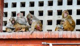Monkeys near Swayambhunath stupa in Kathmandu Royalty Free Stock Photos