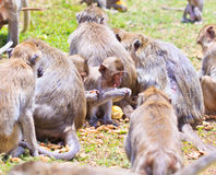 Monkeys Stock Photo