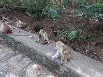Monkeys` family royalty free stock photography