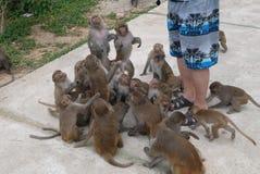 Monkeys outdoors Stock Image