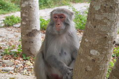 Monkeys outdoors Royalty Free Stock Images