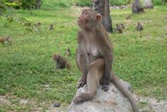 Monkeys outdoors Stock Photography