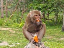 Monkeys outdoors Stock Photo