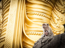 Monkeys outside Hindu temple temple Royalty Free Stock Image