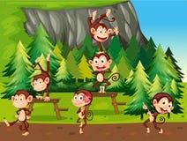Monkeys and park Stock Photos