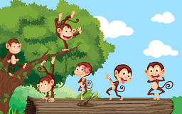 Monkeys in a park. Monkeys on log in the forest Royalty Free Stock Photography