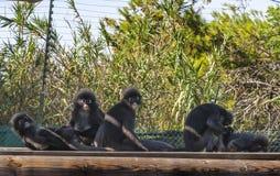 Monkeys in the park Royalty Free Stock Photos