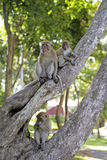 Monkeys in a park in Songkhla, Thailand. Asia Stock Images