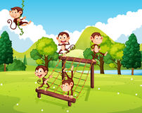 Monkeys playing on climbing station Royalty Free Stock Image