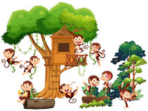 Monkeys playing and climbing up the treehouse Royalty Free Stock Image