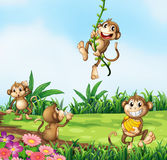 Monkeys playing Stock Image