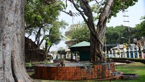 Monkeys playing at Phra Kal Shrine stock footage