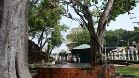 Monkeys playing at Phra Kal Shrine stock video