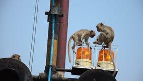 Monkeys playing on siren light of railway train. Near Phra Prang Samyod on Lopburi, Thailand stock video footage