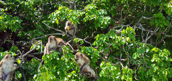 Monkeys posing for tourists in Thailand. This image presents some monkeys posing for tourists in Thailand Stock Photo