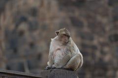Monkeys at Prang Sam Phaya. Historical Site, Lop Buri, Thailand Royalty Free Stock Photo