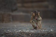 Monkeys at Prang Sam Phaya. Historical Site, Lop Buri, Thailand Stock Photo