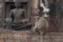 Monkeys at Prang Sam Phaya. Historical Site, Lop Buri, Thailand Stock Photography