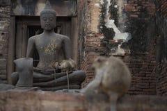 Monkeys at Prang Sam Phaya. Historical Site, Lop Buri, Thailand Royalty Free Stock Image