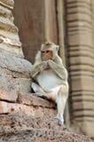 Monkeys at Prang Sam Yod Stock Photos