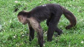 Monkeys, Primates, Zoo Animals, Wildlife, Nature stock footage