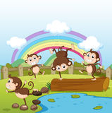 Monkeys and a rainbow Stock Image