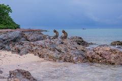 Monkeys. Seating on the stones of the  island Royalty Free Stock Photography