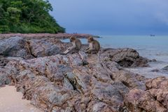 Monkeys. Seating on the stones of the  island Royalty Free Stock Photo