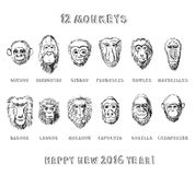 Monkeys set. Collection of hand drawn monkeys in sketchy style stock illustration