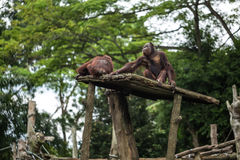 Monkeys sit in zoo Stock Photos