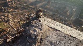 Monkeys sitting on top of a mountain stock footage
