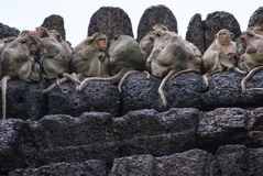 Monkeys sleep over the temple Stock Image