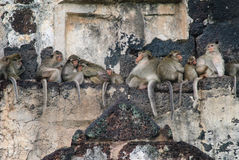 Monkeys sleep over the temple Stock Photography