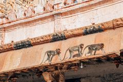 Monkeys at Sri Virupaksha temple, Hampi, India. Monkeys at Sri Virupaksha temple in Hampi, India royalty free stock image