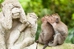 Monkeys and statues Royalty Free Stock Images