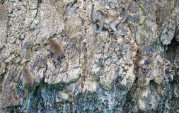 Monkeys on the stone island Stock Photos