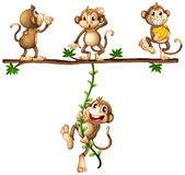 Monkeys swinging Stock Photo