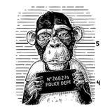 Monkeys in a T-shirt holding a police department banner. Monkeys in a T-shirt holding a police department table. Vintage black engraving illustration for poster stock illustration