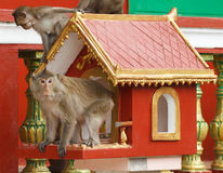 Monkeys in temple Royalty Free Stock Photo